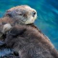 morski zagrljaj