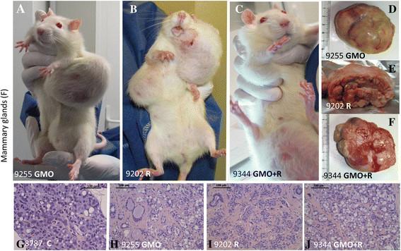 Na slici vidite štakore s velikim tumorima koji su nastali zbog utjecaja GM kukuruza i Roundupa, treba li nam još dokaza o opasnostima GM proizvoda?