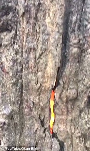 Detalj kore drva iz akojeg se vidi živi plamen.