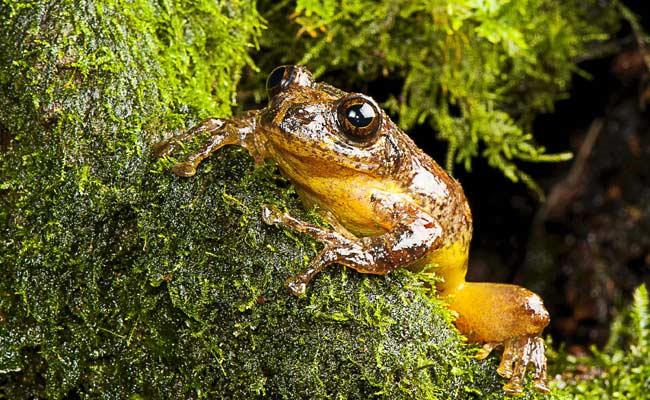 Odrasli primjerak žabe.