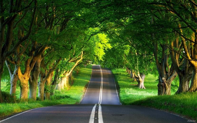 Može li nam boravak u šumi biti put ka boljem i dugovječnijem življenju?