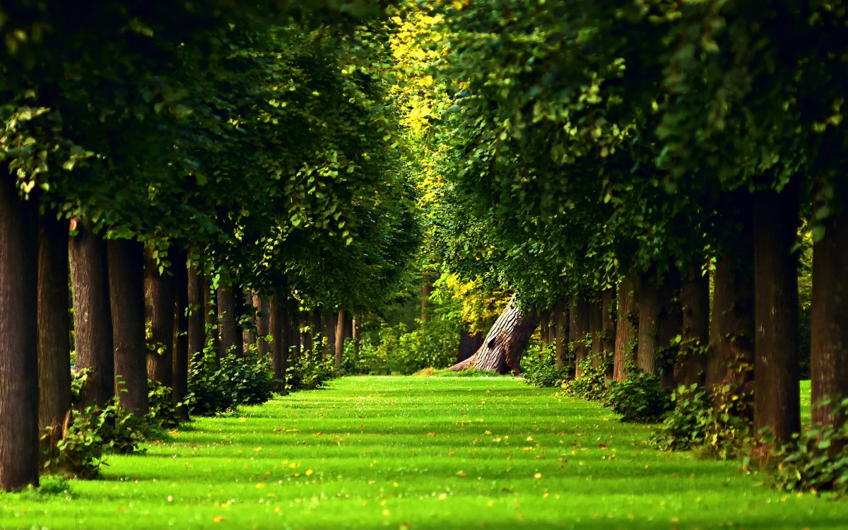 Ovisi li naša dugovječnost o 'zelenilu'?