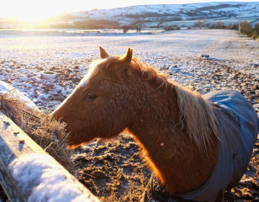 Konj izdržava snijeg i hladnoćuu smrznutim moćvarama Yorka.