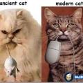 razlika između mačaka prije i sada