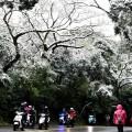 Snijeg u subtropskom Hing Kongu