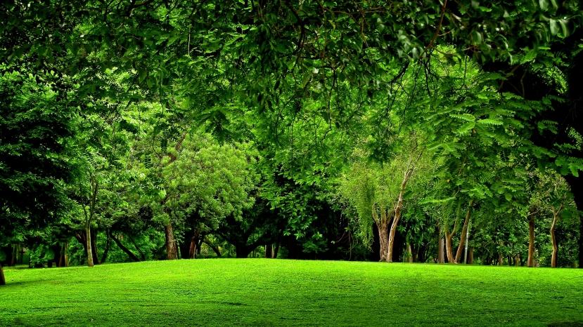 Kako se osjećate dok gledate ovaj prizor? Osjećate li nostalgiju za prirodom najbolje rješenje za taj osjećaj je jednostavan odlazak u prirodu.