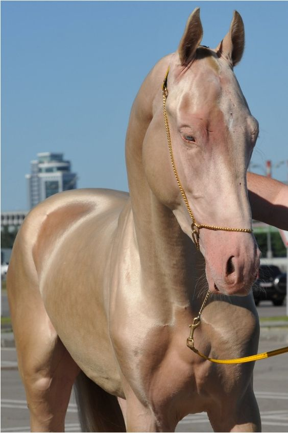 Konj za kojeg su nogi smatrali da je photoshopiran zaista postoji i proglašen je najljepšim konjem 2012.
