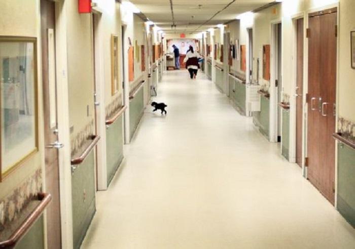 Nala svaki dan ide od vrata do vrata kako bi posjetila svoje pacijente.
