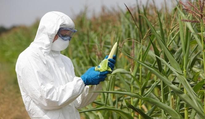 Kakvo dobro možemo očekivati od industrijske poljoprivrede koja je upropastila planetarnu floru i faunu i koja upropaštava naše zdravlje?