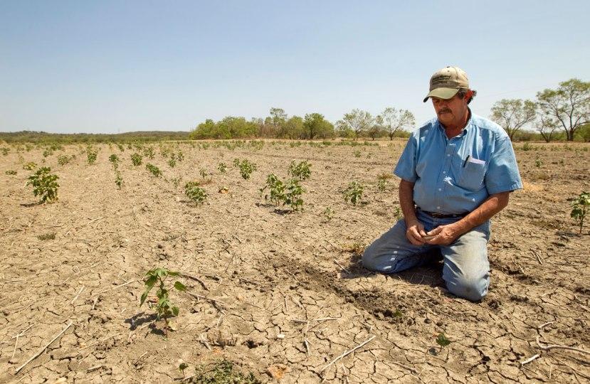 Kompletnni srednji zapad SAD-a se pretvorio u sušnu i nerodnu ravnicu. NA slici vidite upropaštenu oranicu u Teksasu, dijelom zbog iscrpljenih rezervi dubokih voda, dijelom zbog iscrpljivanja tla, a dijelom zbog GM sorti koje su iznimno osjetljive.