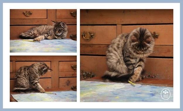 Thula je poneklad obična zaigrana mačka.