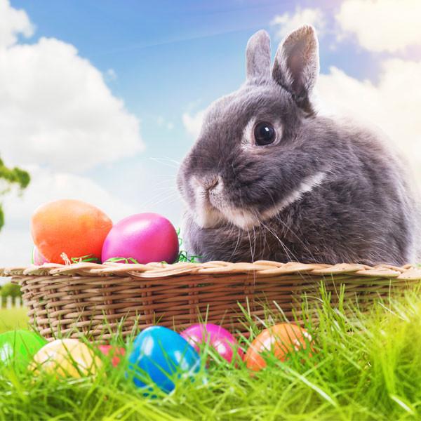 Zec i jaja, antički simboli proljeća, plodnosti, života i kršćanskog Uskrsa.