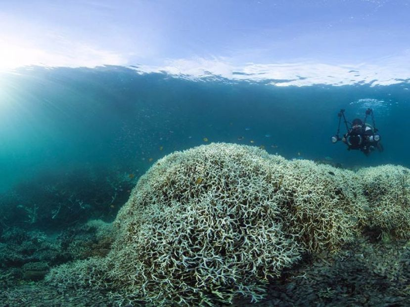Stravične slike iz podmorja na sjeveroistoku Australije