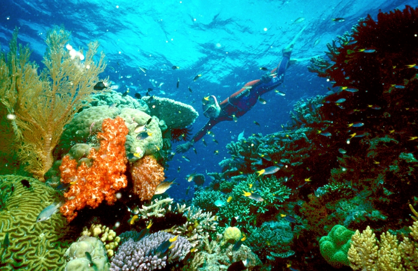 Prije nepune četiri godine većina Velikog koraljnog grebena je izgledala ovako.