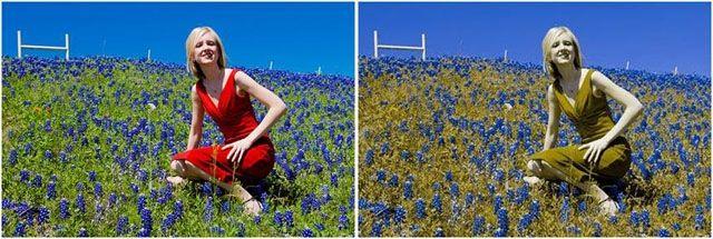 Razlika između našeg viđenja boja i viđenja prosječnog daltoniste.