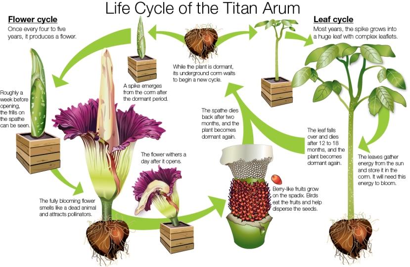 Čudesan životni ciklus Titan Aruma.