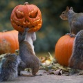 halloween na vjeveričji način
