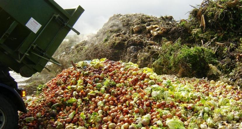 Jesmo li svjesni činjenice koliko se hrane baci na otpad svake godine?