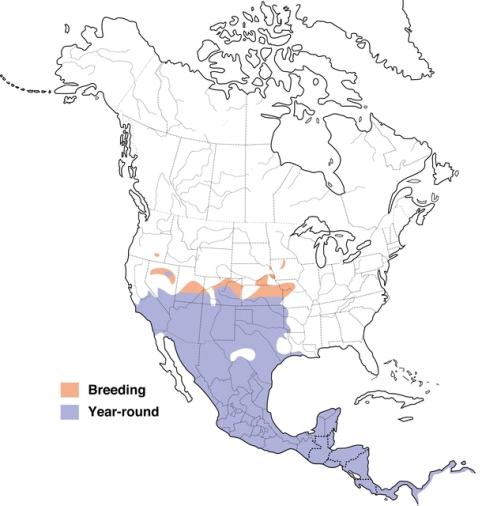 Meksički dugorepi kosovi dana nastanjuju velika područja SAD-a, Meksika i srednje Amerike, zahvaljujući Astecima.
