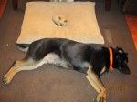 funny-cat-sleeping-dogs-bed