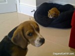 funny-pictures-dog-1