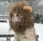 lavlja-griva-za-zimske-uvjete