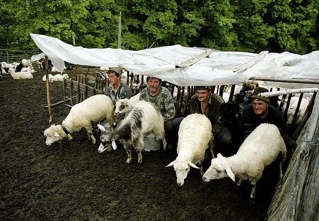 Seks sa životinjama dozvoljen u dvije europske zemlje – sramotno