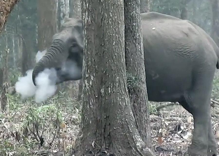 """Snimljena divlja slonica """"pušačica"""""""