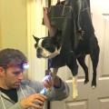 kako odraditi pseću pedikuru
