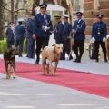 državni posjet Bosni