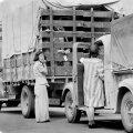Američki Japanci se odvoze u logore
