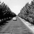 autocesta Kabul-Herat 1952. uništili su je talibani