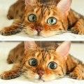 prije i nakon mačje metvice