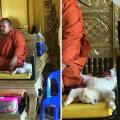 samo u budista