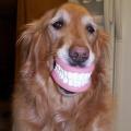 osmijeh lice krasi