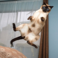 što zna mačka što je gravitacija