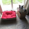 krevet na kvadrat