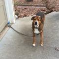 ovo je stvarno poslušan pas!