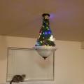 snađi se druže kad u kući imaš mačku