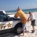 tko je uhićen, konj ili mladić?