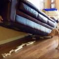 pas samo radi što mu je prirodno, bilo to u stanu ili dvorištu