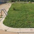 bazenska trava