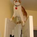 mačka na visokoj nozi