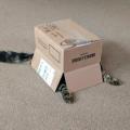 dobro skrivena mačka