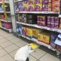 zna maca gdje je hrana