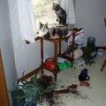 mačje dekoriranje stana