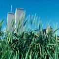 Polje pšenice usred Manhattna 1982.