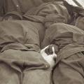 Psić spava između dva vojnika Crvene armije 1945.