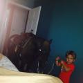 bravo sine, konja u spavaću?