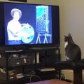 mačka zaljubljena u slikarstvo